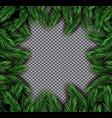 fir branch square frame on transparent background vector image