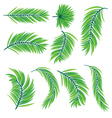 Green Palm Leaves vector image vector image