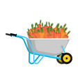 wheelbarrow and carrot vegetables in garden vector image vector image