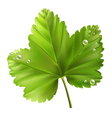 currant leaf vector image vector image