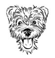 dog breed terrier vector image vector image