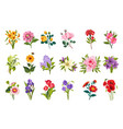 garden flowers collection vector image vector image