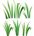 green grass on white vector image vector image