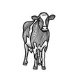 spotted calf sketch black and white hand drawing vector image