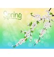 Spring blooming cherry branch with white flowers vector image