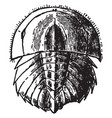 horseshoe crab young vintage vector image vector image