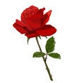 Beautiful red rose object isolated vector image