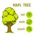 color green sketch a tree vector image vector image