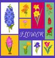 floral background for flower shops or invitation vector image