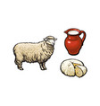sketch sheep milk and cheese set isolated vector image vector image