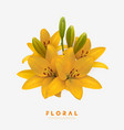 yellow lilies isolated on vector image