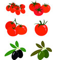 collection of fresh red tomatoes ripe black and vector image