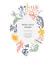 hand drawn medicinal herbs frame design flowers vector image