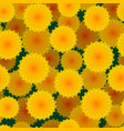 daisies flower seamless pattern vector image vector image