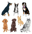 sitting dogs collection isolated on white vector image