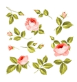 The Flowers set vector image vector image