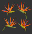 tropical flowers and leaves set exotic floral vector image