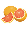 cartoon grapefruit fresh vitamin fruit juicy vector image vector image