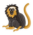 golden-headed lion tamarin isolated wild ape vector image vector image