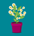 flat flower in pot vector image vector image