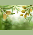 green olive tree with ripe fruits vector image vector image