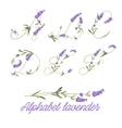 Set of lavender flowers vector image vector image