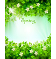 spring branches with fresh green leaves season vector image vector image