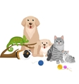 Home pets set cat dog parrot goldfish hamster