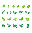 leaves icon set ecology icon set vector image vector image