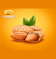 realistic detailed almonds with nutshells vector image vector image