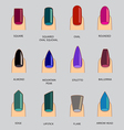 Set of different shapes of nails on gray Nail vector image vector image