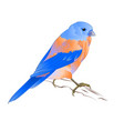 small thrush bluebird songbirdon vector image vector image