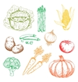 Autumnal organic farm vegetables colored sketches vector image vector image