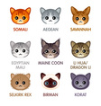 Cute cat icons set IV vector image
