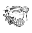graphic honey bottle decorated with chamomile vector image vector image