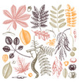 hand sketched autumn leaves collection in color vector image vector image