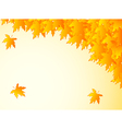 background in warm colors with yellow maple leaves vector image