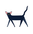 oriental shorthair cat breed flat vector image