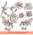collection of engraved roses in antique style vector image vector image
