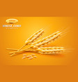 detailed wheat ears oats or barley isolated on a vector image