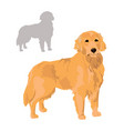 golden retriever and silhouette isolated on white vector image