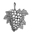 grape in engraving style design element for vector image vector image