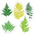 fern leaves silhouettes vector image vector image