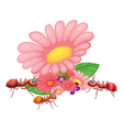 Fresh flowers with ants vector image