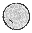 Conceptual background with tree-rings graphics vector image