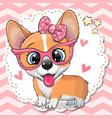 cute corgi dog girl in pink eyeglasses vector image