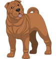 funny purebred shar pei vector image vector image