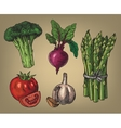 hand drawn of vegetables vector image vector image