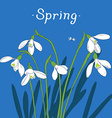 Snowdrops spring bouquet Hand-drawn Card vector image vector image