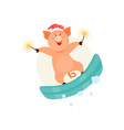 christmas pig on a snowboard vector image
